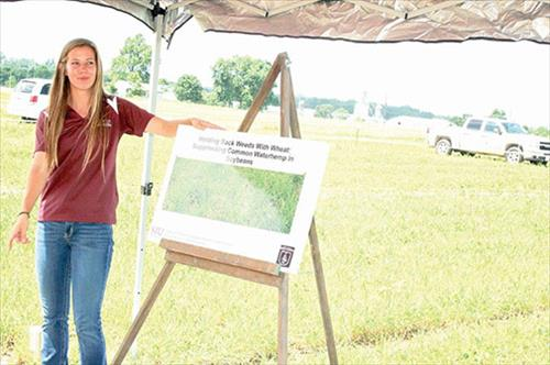 Field Day: SIU studying crop-based strategy to suppress waterhemp