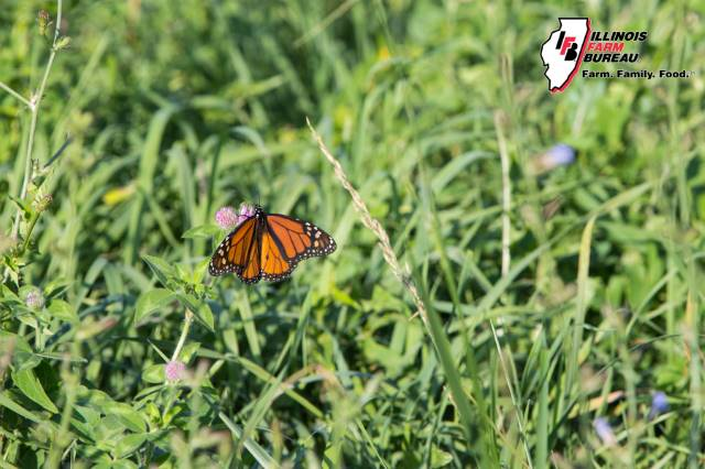 Illinois ag taking action for monarchs