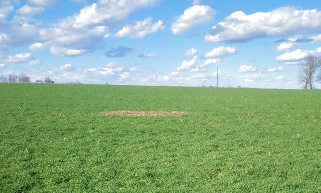 Cover crops, nutrient data focus of Bureau County field day